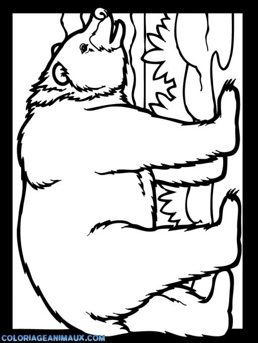 coloriage cadre d'ours pour enfants
