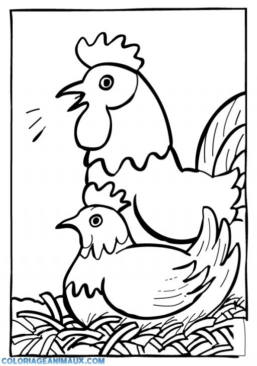 coloriage cadre de poules pour enfants