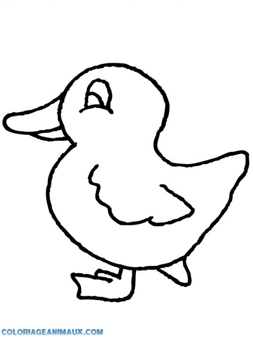 Coloriage canard qui attend sa maman imprimer - Canard dessin facile ...