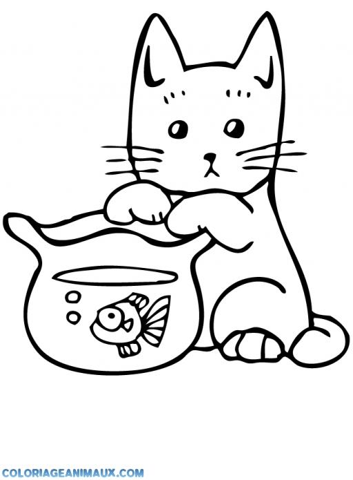 coloriage chat regarde un poisson rouge pour enfants