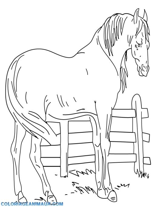 Coloriage cheval dans un enclos imprimer - Dessin facile de cheval ...