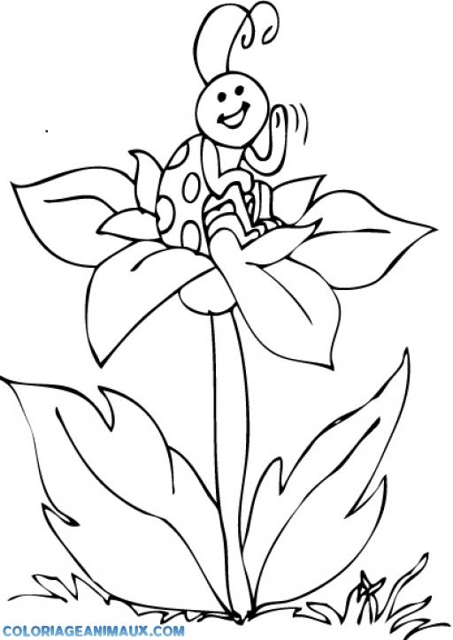 Coloriage coccinelle sur une fleur imprimer - Dessin cocinelle ...