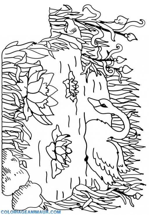 coloriage cygnes avec des fleurs pour enfants