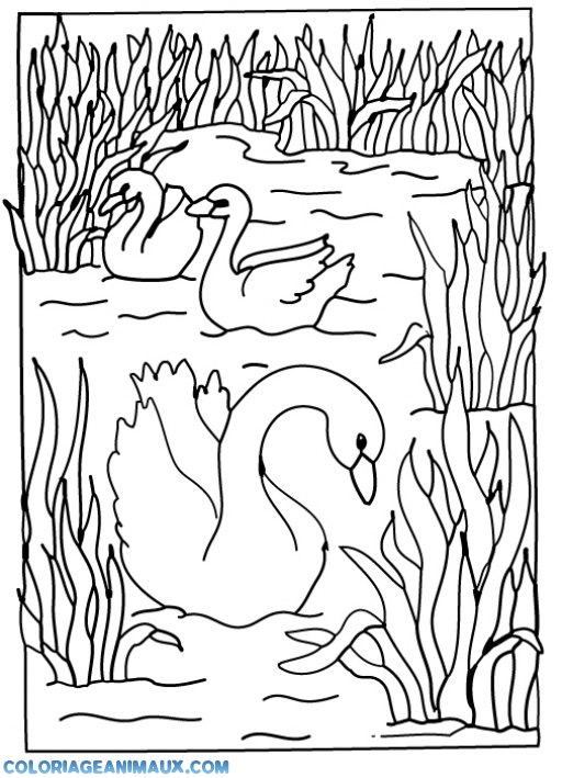coloriage cygnes dans la rivière pour enfants