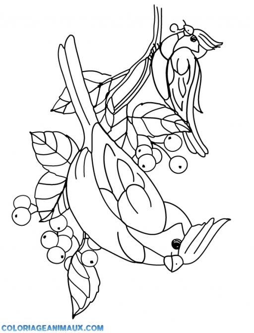 Coloriage deux oiseaux mangent des fruits imprimer - Dessin d oiseau a imprimer ...