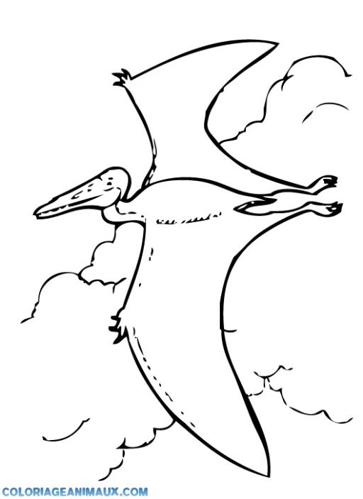 Coloriage Dinosaure Pterodactyle Qui Vole A Imprimer