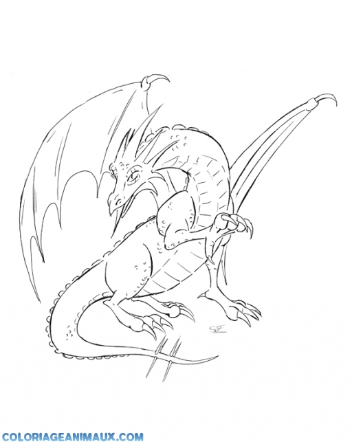 Coloriage dragon f roce imprimer - Dessin facile de dragon ...