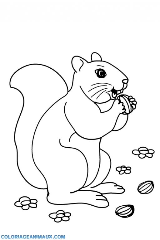 Coloriage cureuil qui a attrap une noisette imprimer - Dessin noisette ...
