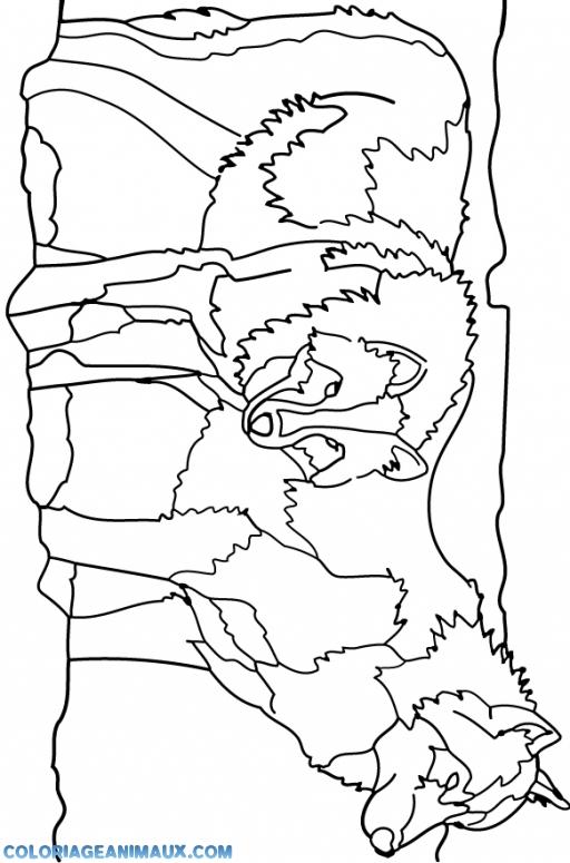 Coloriage Famille Loup.Coloriage Famille De Loup A Imprimer