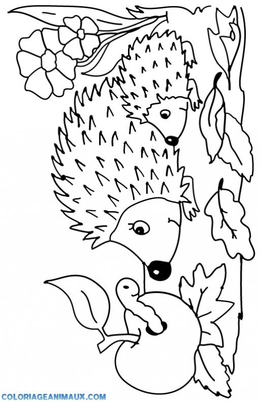 Coloriage famille h risson imprimer - Herisson coloriage ...
