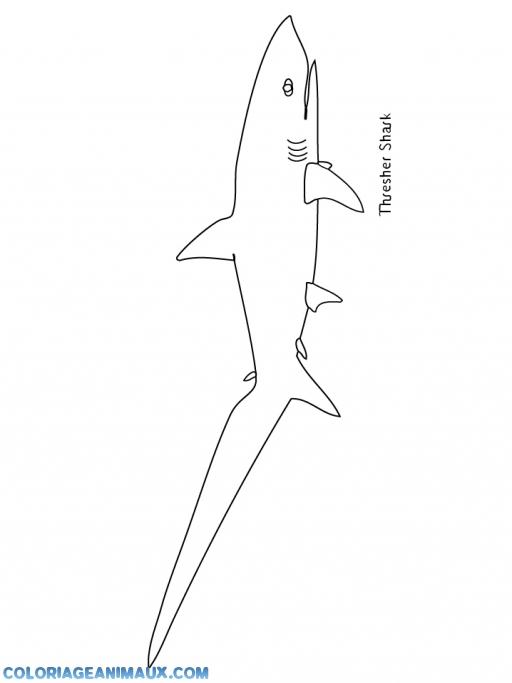 coloriage grand requin blanc pour enfants