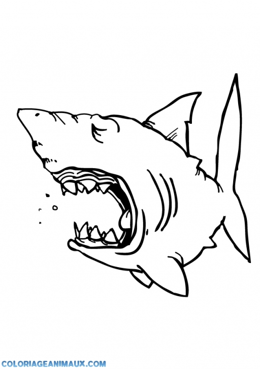 coloriage gros requin qui baille pour enfants