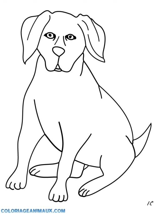 Coloriage Labrador Assit à Imprimer