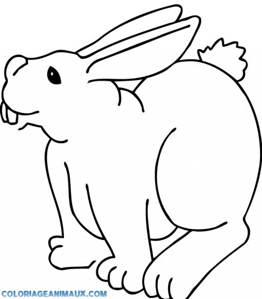 coloriage lapin de la ferme pour enfants