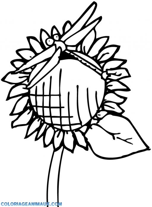 coloriage libellule posée sur un tournesol pour enfants