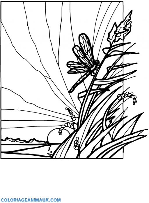 Coloriage libellule sur un roseau imprimer - Photo de libellule a imprimer ...