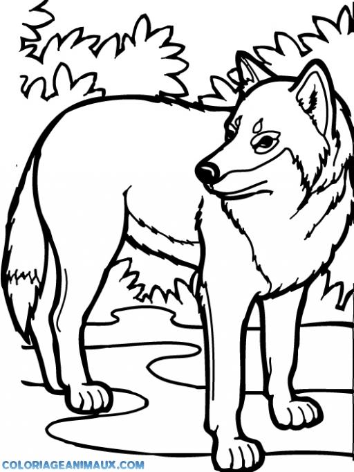Coloriage Loup Dans La Foret.Coloriage Loup Dans La Foret A Imprimer