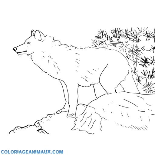 Coloriage loup dans la montagne imprimer - Image loup dessin ...