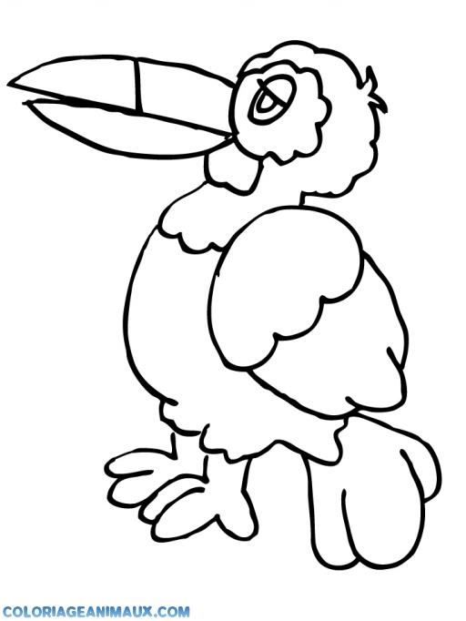 coloriage oiseau à grand bec pour enfants