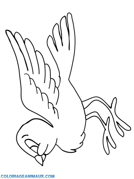 Coloriage Animaux Foret Imprimer.Coloriage Oiseau De La Foret A Imprimer