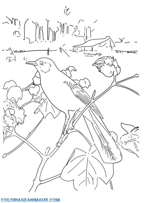Coloriage Oiseau Sur Arbre.Coloriage Oiseau Sur Une Branche D Arbre A Imprimer