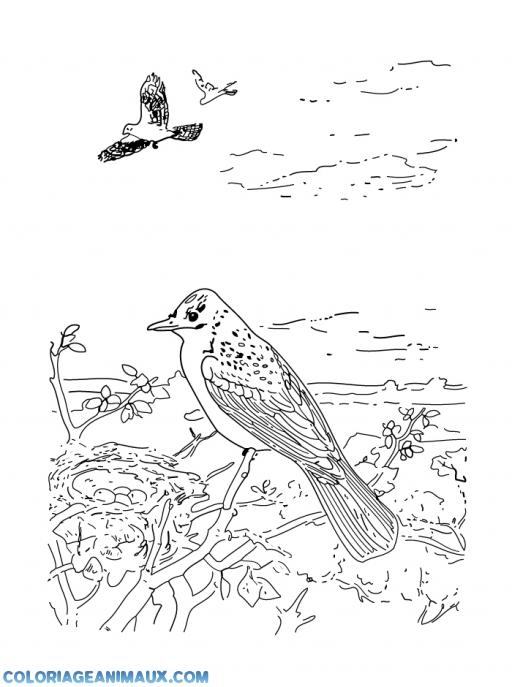 Coloriage Animaux Oiseaux.Coloriage Oiseaux Dans Un Beau Paysage A Imprimer