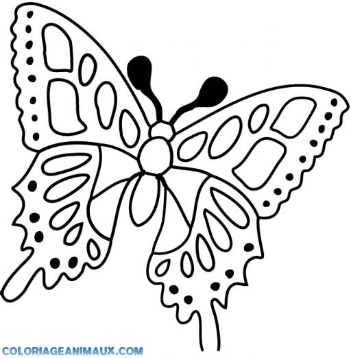 coloriage papillon à l'arrêt pour enfants