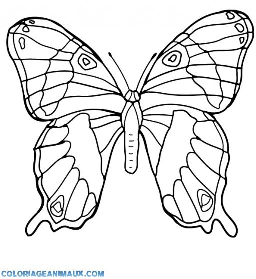 Coloriage papillon avec des ailes magnifiques imprimer - Coloriage de papillon a imprimer gratuit ...