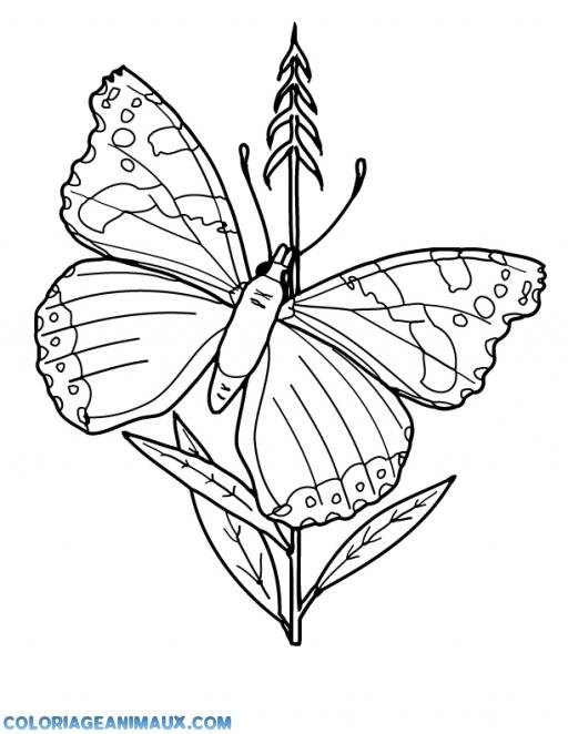 Coloriage papillon sur une plante imprimer - Plantes pour papillons ...