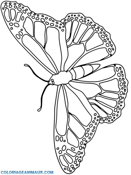 Coloriage Animaux Volants.Coloriage Papillon Volant A Imprimer