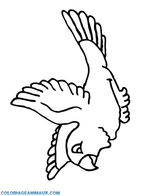 Coloriage Perroquet En Plein Vole A Imprimer