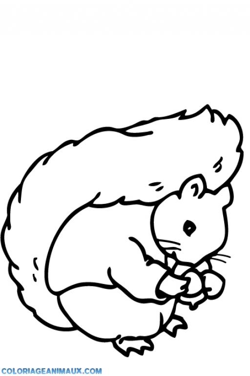 coloriage petit bébé écureuil pour enfants
