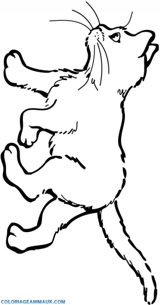 Coloriage petit chaton qui marche imprimer - Coloriage chaton a imprimer gratuit ...
