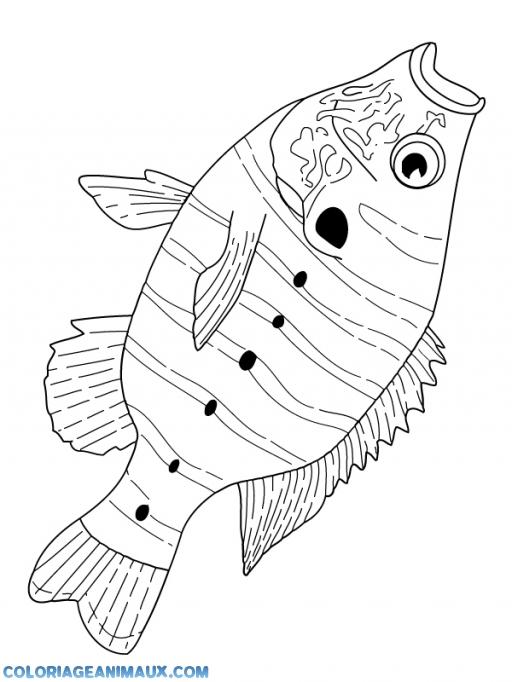 coloriage poisson carpe la bouche ouverte pour enfants