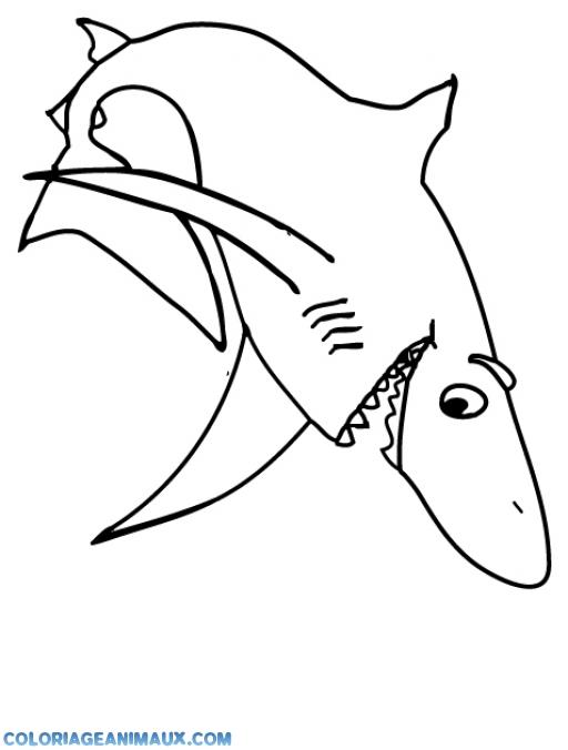 Coloriage requin blanc tr s content imprimer - Coloriage requin blanc ...
