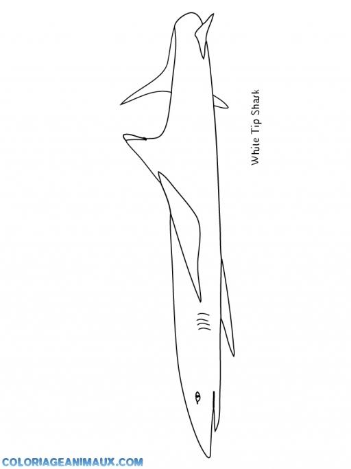 Coloriage requin blanc imprimer - Coloriage requin blanc ...