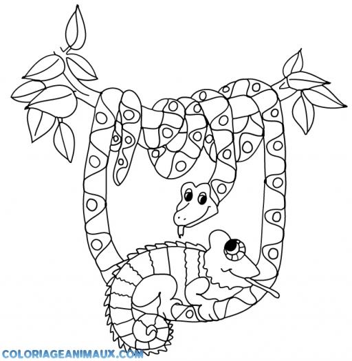 Dessin arbre savane - La savane dessin ...
