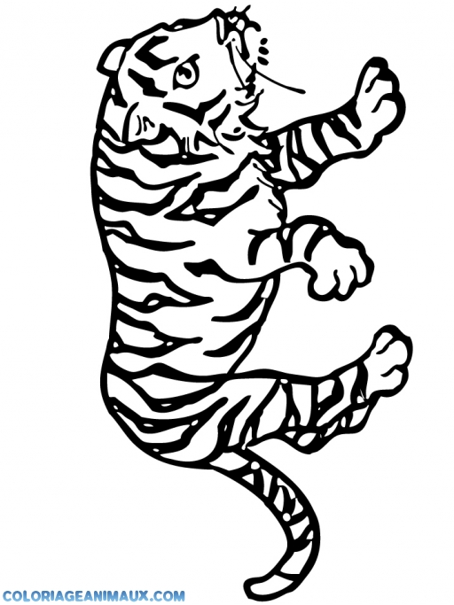 Coloriage tigre de la savane imprimer - Felin de la savane ...