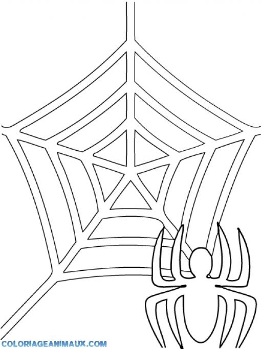 coloriage toile d'araignées pour enfants