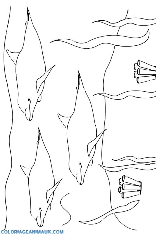 Coloriage trois dauphins dans l 39 oc an imprimer - Dessin a imprimer de dauphin ...