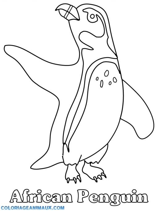 Coloriage un pingouin fait le beau imprimer - Coloriage minable le pingouin ...
