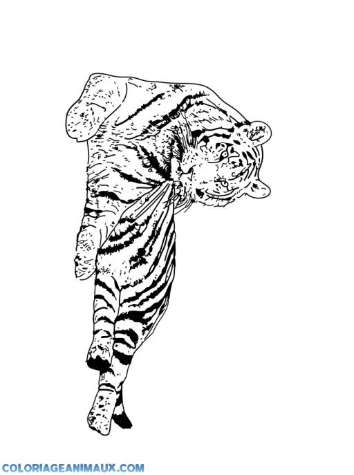 coloriage un tigre se repose tranquille pour enfants