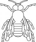 abeille assise tranquillement