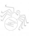 araignée à 8 pattes