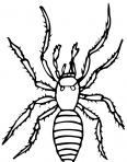 araignée au repos