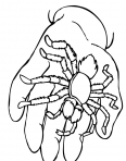 araignée dans une main