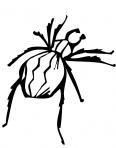 araignée en train de marcher