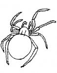 araignée qui marche