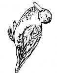 beau canard des bois
