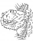 beau lion de la savane